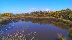 dew pond keymer