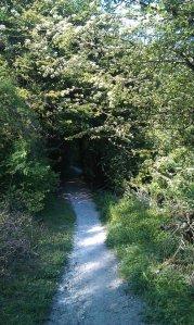 Scrub Woodland on Blackcap