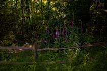 Darwell Wood in the High Weald