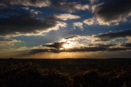 Sunset, Ashdown Forest
