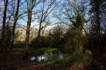 Woodland ponds, often overlooked, provide a wonderful ecological service