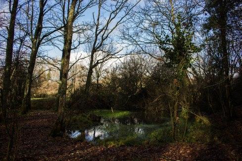 Woodland ponds, often overlooked, provide a wonderful ecological service