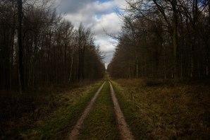 A woodland ride through the beech