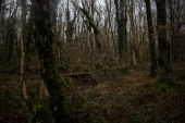 A medieval woodbank separates the beech forest from the richer, older woodland near the summit of the hill