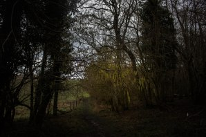 Hazel catkins festoon the woods