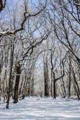 Blackbrook Wood, Low Weald