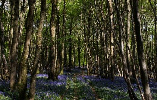 West Wood, Low Weald