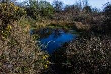 Dew pond near the summit of Newtimber Hill
