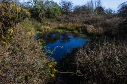 Dew pond near the summit of Newtimber Hill