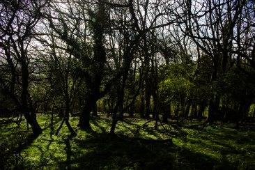 Scrub woodland