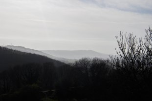 Chanctonbury Ring in the distance